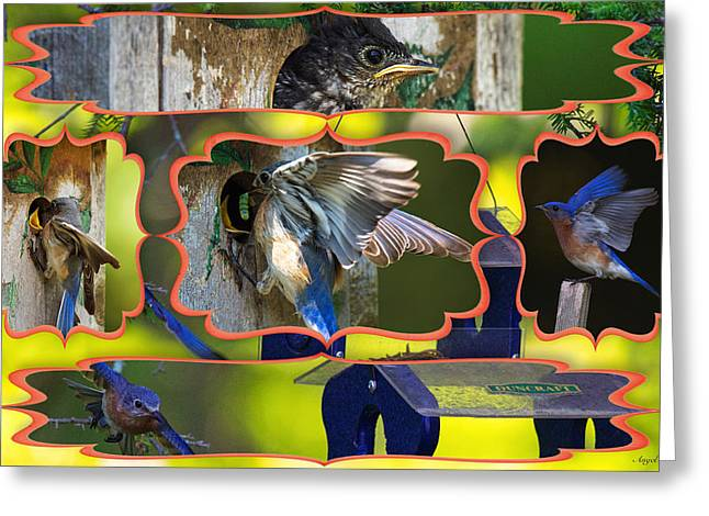 Blue Collage 2 Greeting Card by Angel Cher