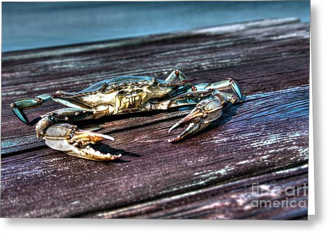 Blue Crab - Above View Greeting Card