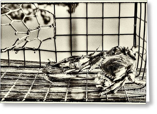Blue Crabs - Vintage Greeting Card