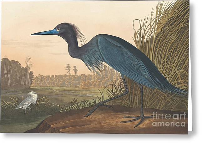 Blue Crane Or Heron Greeting Card