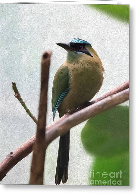 Blue-crowned Motmot Oil Greeting Card