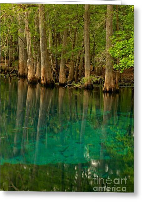 Blue Cypress Reflections Greeting Card by Adam Jewell