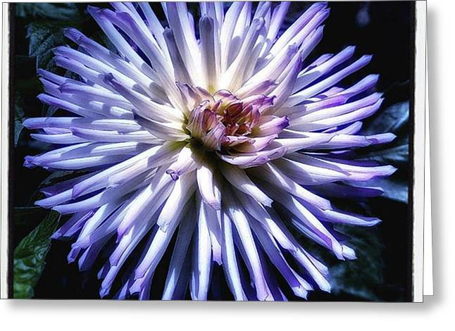Greeting Card featuring the photograph Blue Dahlia. Like A Winking  Star In by Mr Photojimsf