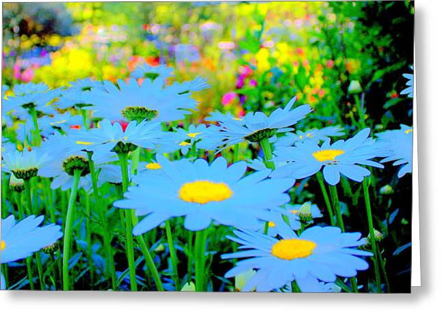 Blue Daisy Greeting Card by Terence Morrissey