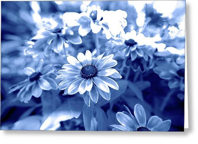 Blue Daisys Greeting Card by Sean Davey