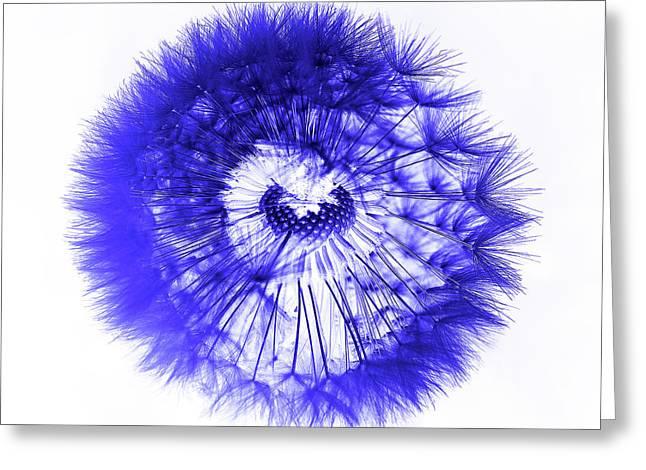 Blue Dandelion Greeting Card by Daniel Hagerman
