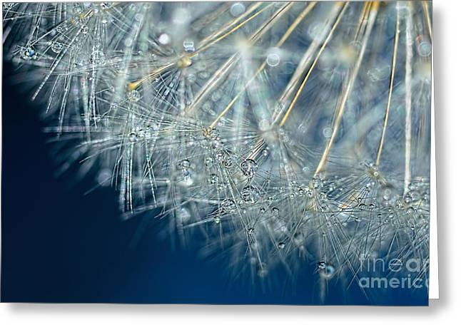 Blue Dandelion Dew By Kaye Menner Greeting Card