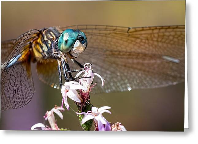 Blue Dasher Dragonfly Resting Greeting Card