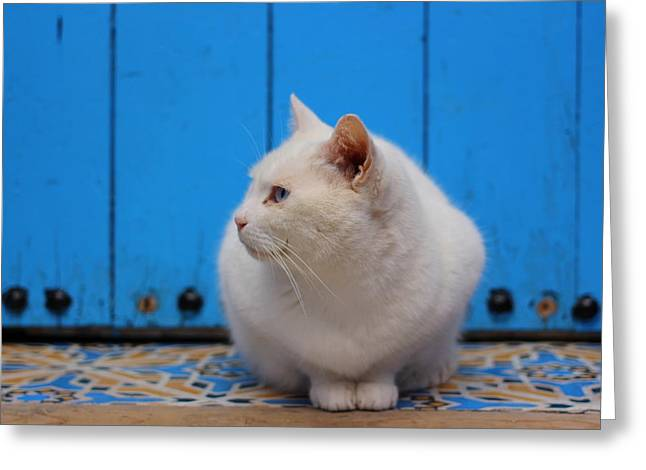 Greeting Card featuring the photograph Blue Door White Cat by Ramona Johnston