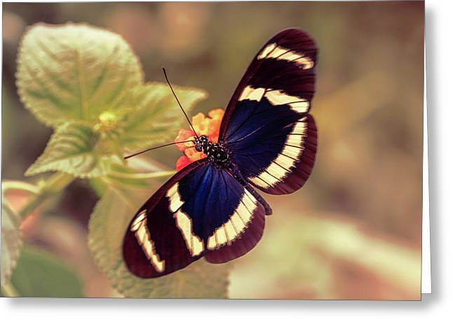 Blue Doris Longwing Butterfly Greeting Card
