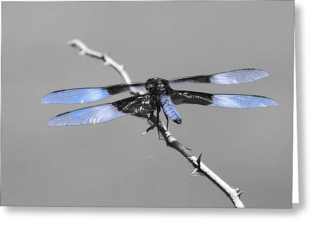 Blue Dragon Greeting Card by Cindy Manero