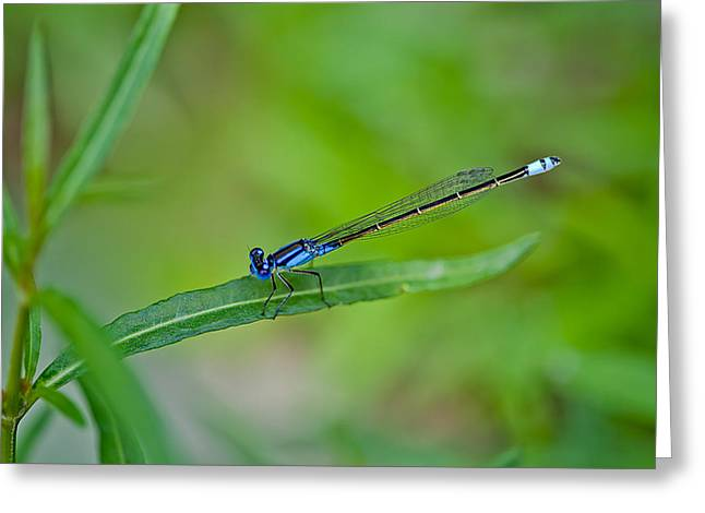 Blue Dragonfly Greeting Card by Az Jackson
