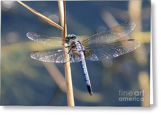 Blue Dragonfly Greeting Card by Carol Groenen