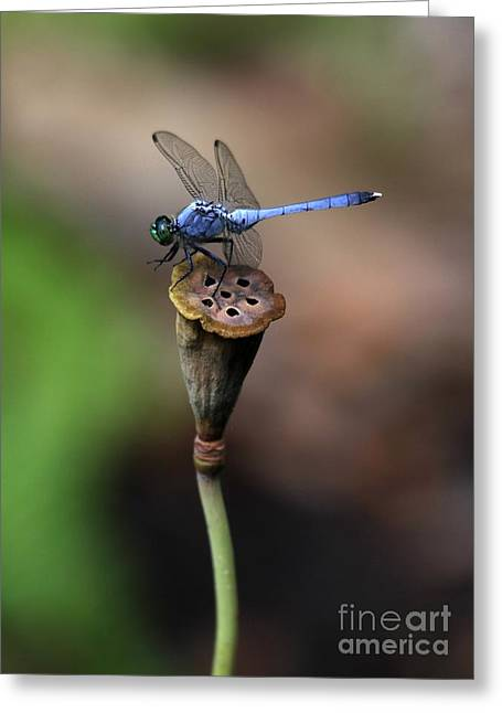 Blue Dragonfly Dancer Greeting Card