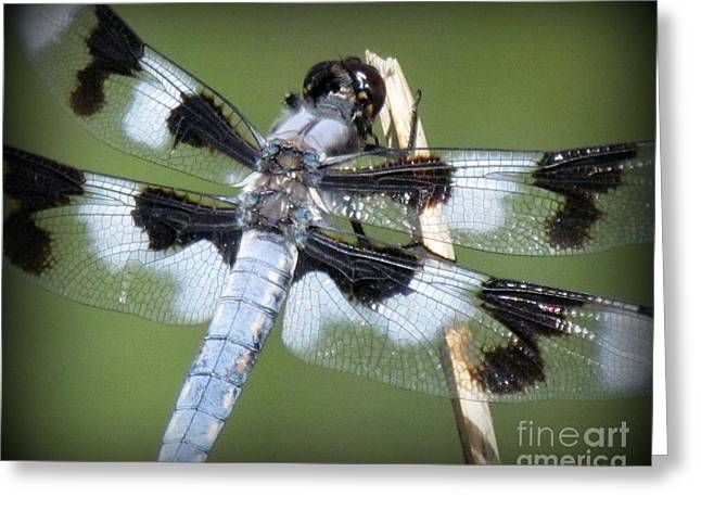 Blue Dragonfly Greeting Card by Krista Carofano