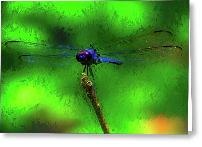 Blue Dragonfly On Green Greeting Card
