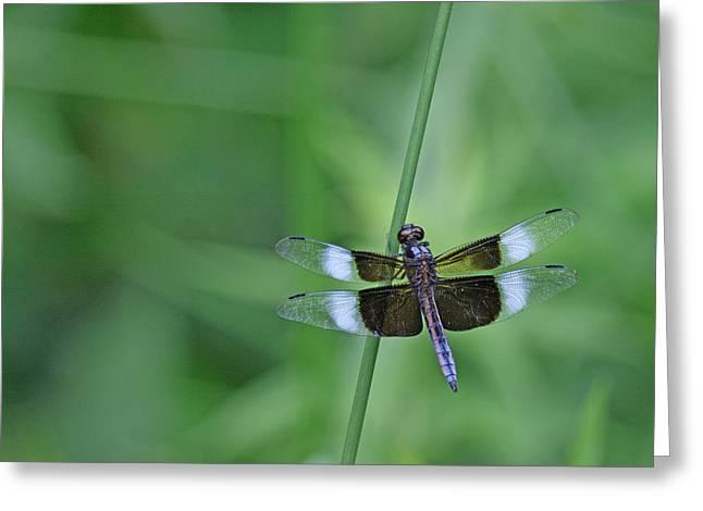 Blue Dragonfly Greeting Card by Tina B Hamilton