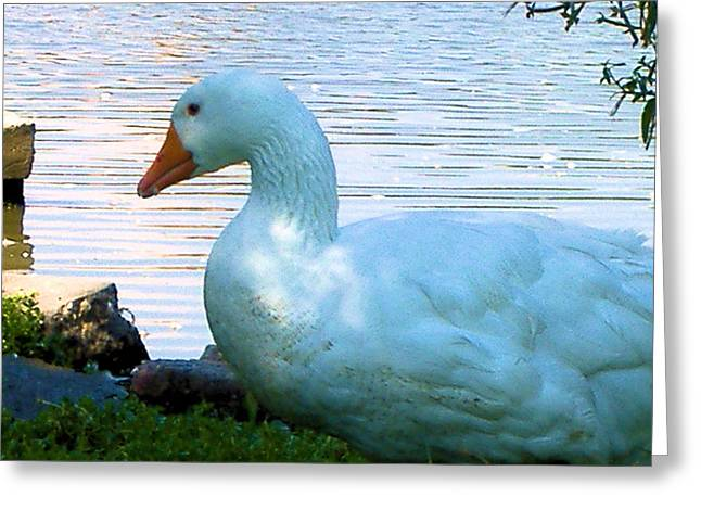 Greeting Card featuring the photograph Blue Duck by Diane Ferguson