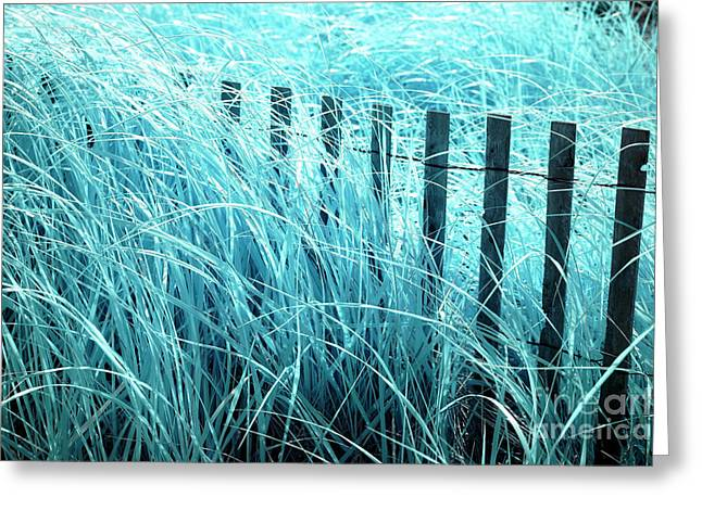 Blue Dune Grass Greeting Card by John Rizzuto