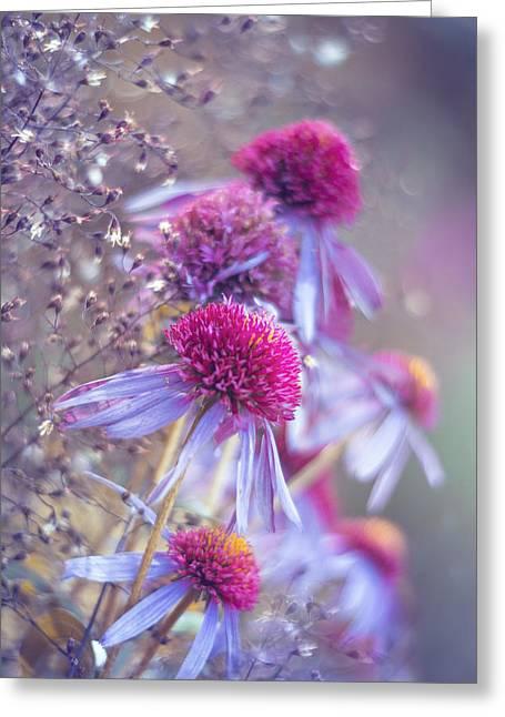 Blue Echinacea  Greeting Card by Magda  Bognar