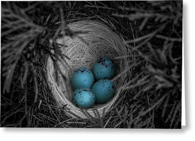 Blue Eggs Selective Color Greeting Card