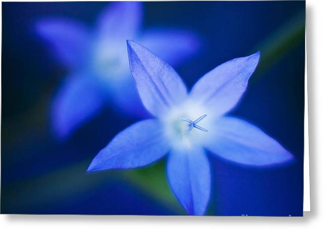 Blue Etoile Greeting Card