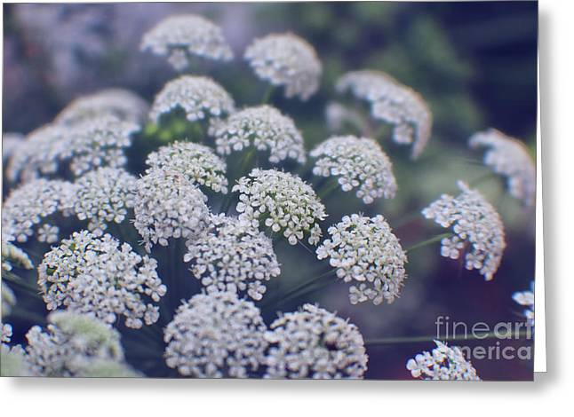 Blue Evening On Queen Anne's Lace Greeting Card