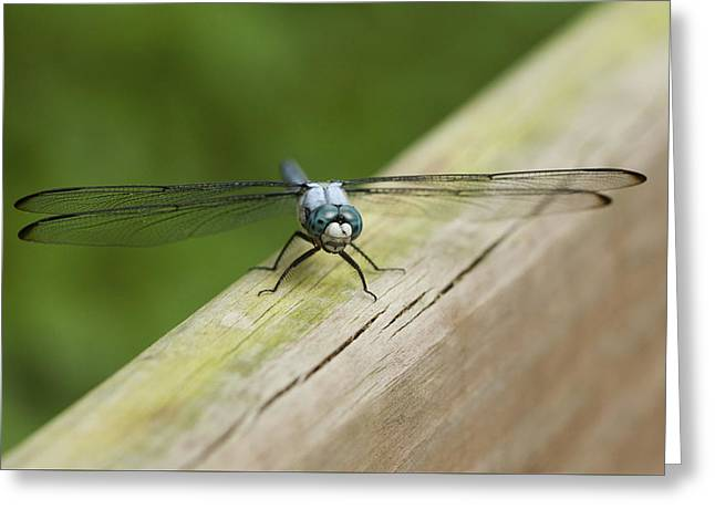 Blue Eyed Dragonfly Darner Greeting Card by Marilyn Hunt