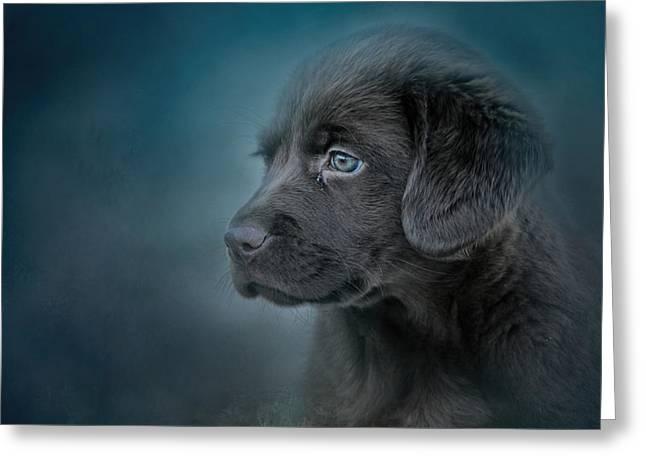 Blue Eyed Puppy Greeting Card by Jai Johnson