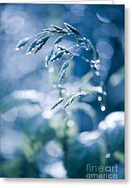Blue Fabulous Grass Shining Greeting Card by Arletta Cwalina