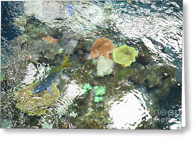 Greeting Card featuring the photograph Blue Fish by Carol Lynn Coronios