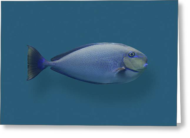 Blue Round Nose Fish Greeting Card by Daniel Furon