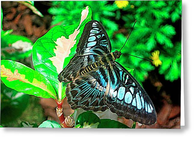 Blue Flight Photography Greeting Card by Mario Perez