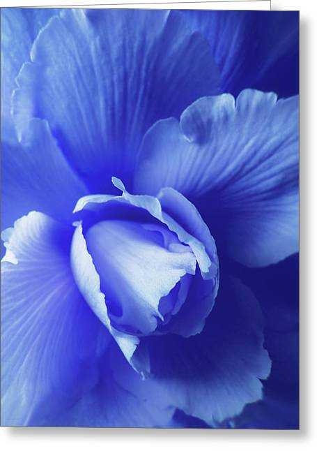 Blue Floral Begonia Greeting Card by Jennie Marie Schell