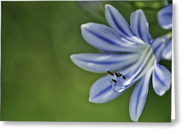 Blue Flower Greeting Card by Nailia Schwarz