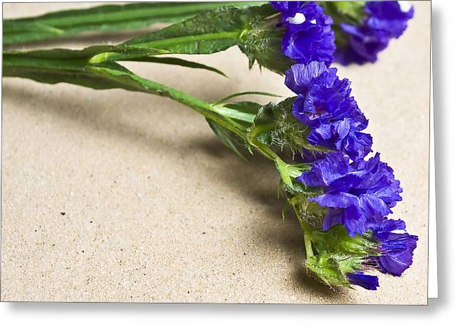 Blue Flower Greeting Card by Svetlana Sewell