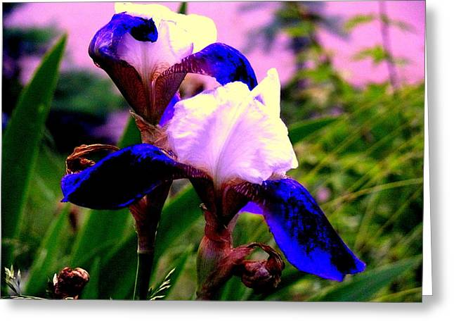 Blue Flowers Greeting Card by Aron Chervin