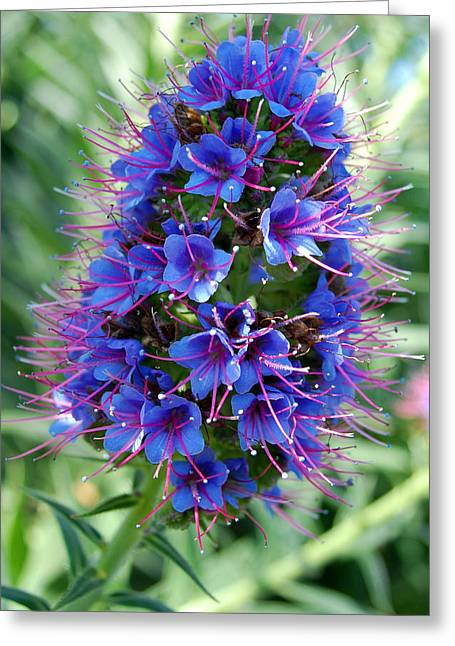 Blue Flowers Greeting Card by Amy Fose