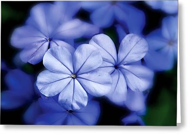 Blue Flowers Greeting Card