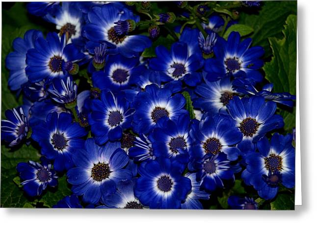 Blue Flowers Greeting Card by Laura Allenby