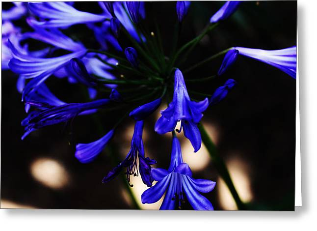 Blue Flowers Greeting Card by Magdalena Green