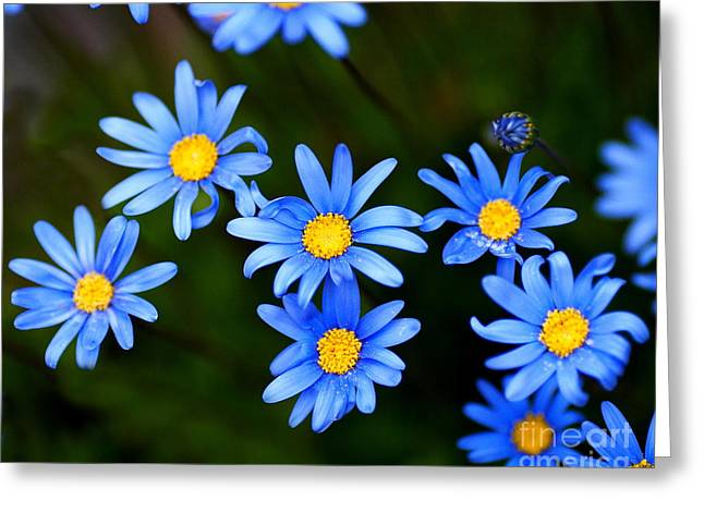 Blue Flowers Greeting Card by Wingsdomain Art and Photography