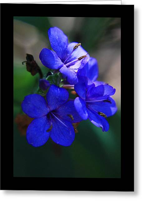 Blue For The Sun Greeting Card