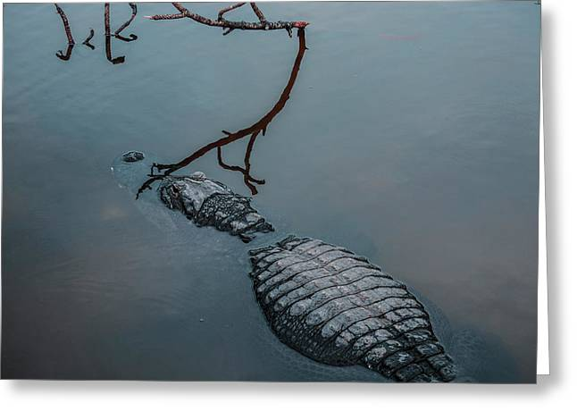 Blue Gator Greeting Card