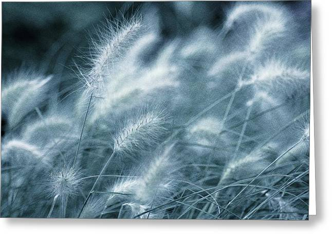 Blue Gras Greeting Card