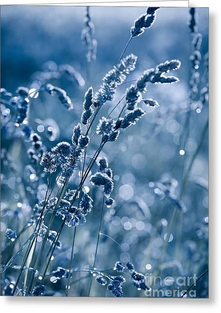 Blue Grass Shining In Bokeh Greeting Card by Arletta Cwalina