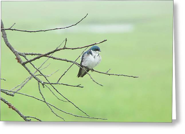 Blue Headed Bird Greeting Card