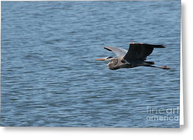 Blue Heron # 1 Greeting Card