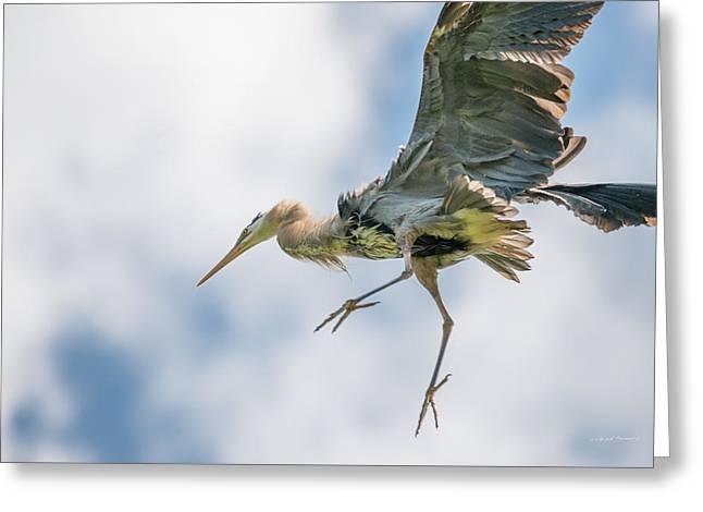 Blue Heron 1 Greeting Card by Leland D Howard