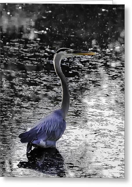 Blue Heron 2008 Greeting Card by Joseph Duba